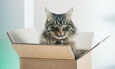 cardboard box history